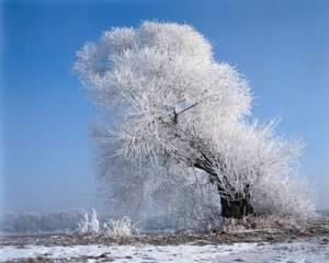 wllpaper_iarna_1280x1024